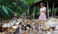 宜州市畔塘村畔塘屯廖翠枝经营生猪养殖和放养土鸡项目