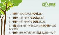 生活小知识:关于一棵树,你应该知道的64个数字