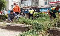 民安社区计生协组织开展修枝除草活动