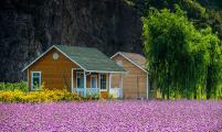 密云花海木屋——荡漾在山谷的花香中入眠