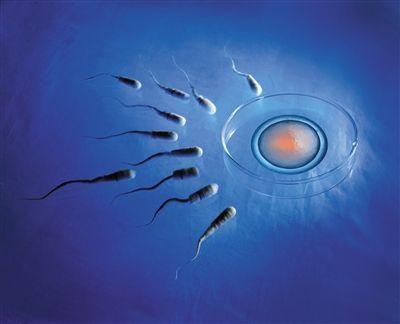 女性超过35岁,卵巢储备功能开始减退,染色体异常几率相应增加,胚胎种植率下降,也会导致成功率低。 创意摄影/新京报记者 王远征