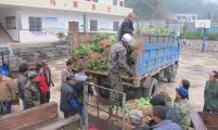 桂林市灵川县海洋乡开展柑桔苗木送农家活动