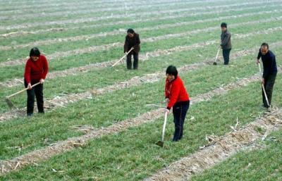 白杨林场威廉希尔登录协成立白杨林场春耕生产帮扶志愿者服务队