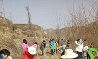 灵台县计生协积极参加春季义务植树活动