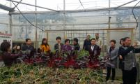 杭州市计生协对生育关怀—致富发展项目开展抽查评估