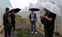 云南省红河州威廉希尔登录协到建水考核督导协会工作
