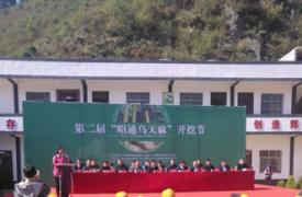 昭通市昭阳区计生协会天麻种植帮扶项目第二届开挖节