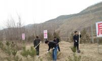 灵台县计生协积极参加义务植树造林活动