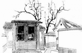 老家的枣树