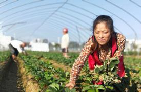 湖南省宁远县:计生家庭有困难 计生协会来帮忙