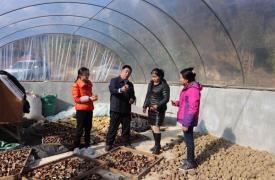 """扶贫项目见实效:云南省威廉希尔登录协对扶贫项目""""再回访"""""""